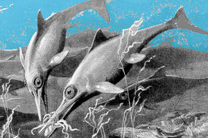 Drawing of two ichthyosaurs