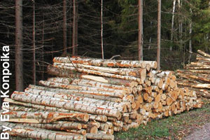 Lumber from trees is used to build houses