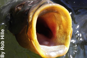 A look inside the mouth of a fish