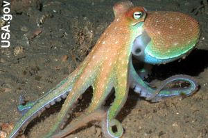 An octopus has its shell on the inside.