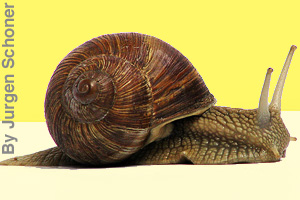 A snail carries its shell.