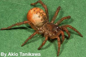 A spider is an invertebrate.