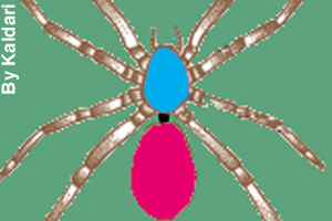 Blue is the cephalothorax; black is the pedicel; pink is the abdomen.