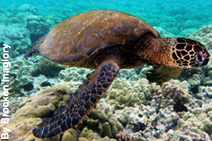 Sea turtles live in the waters of the park.