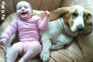 Basset Hounds are very gentle with children