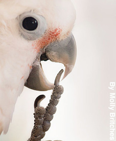 Close-up of a cockatoo's face and foot